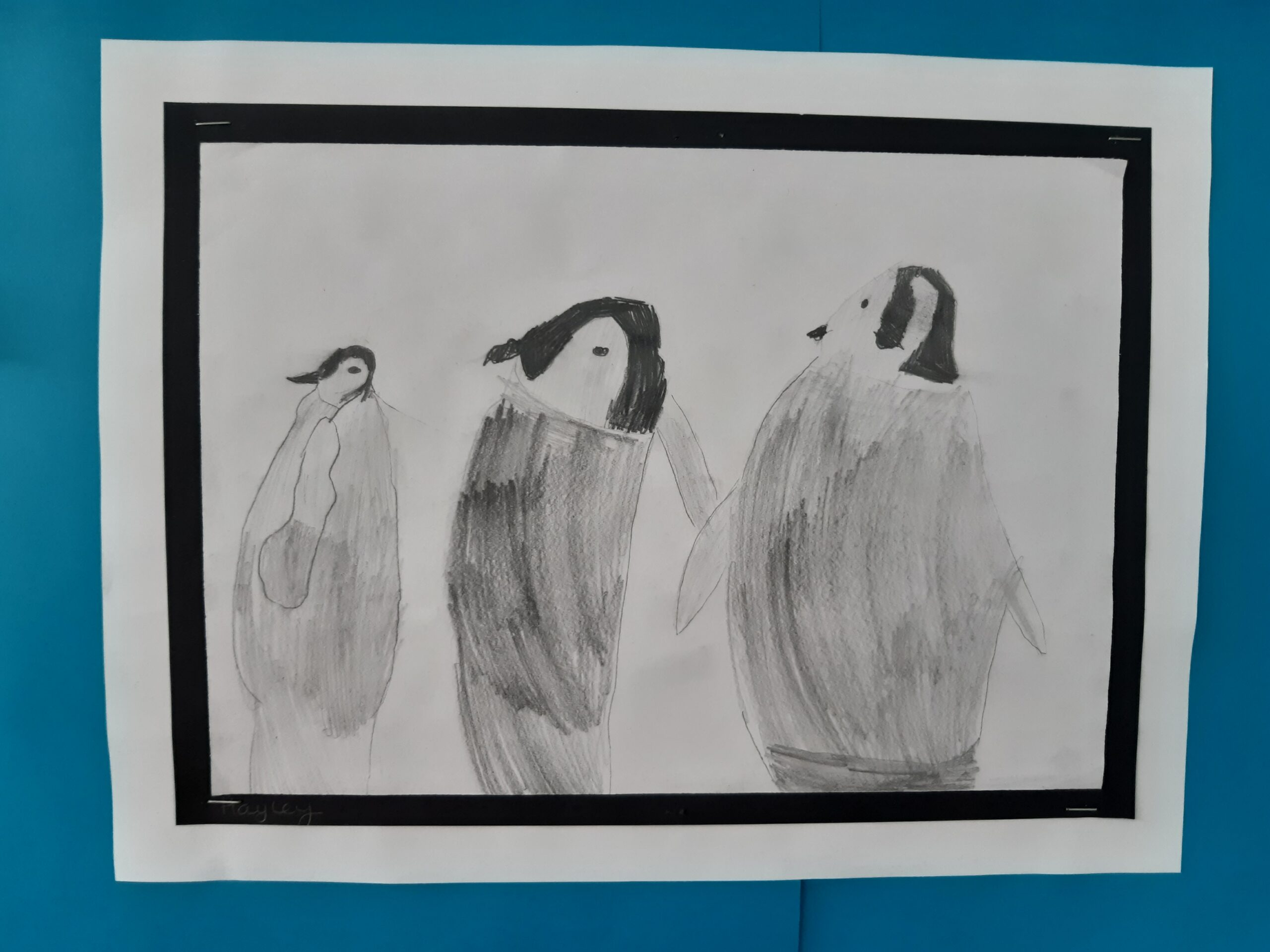 Pencil drawing of an three penguins by pupil